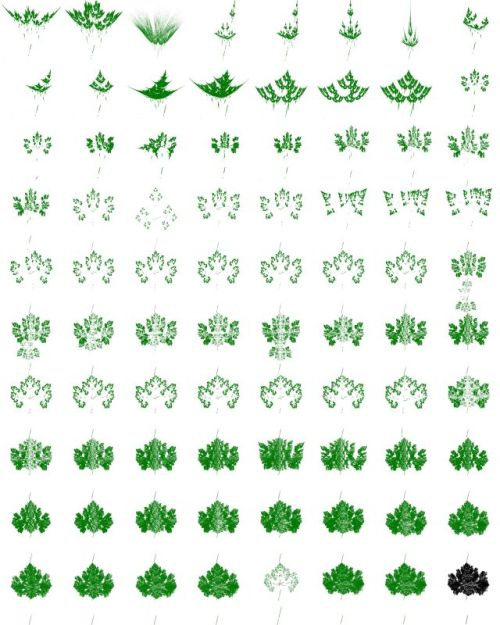 80_Leaf_Attempts_lq