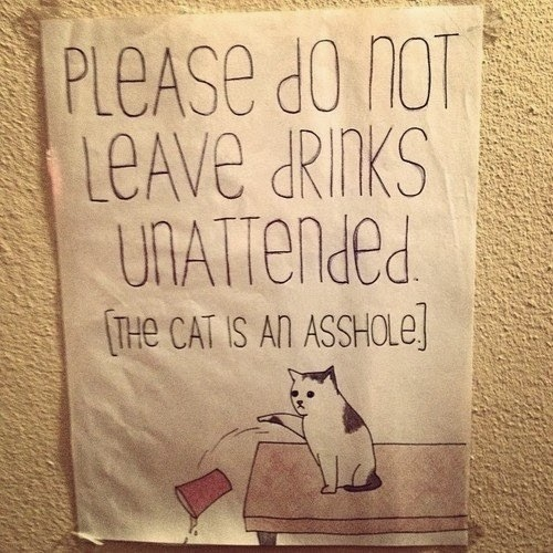 please do not leave drinks unattended the cat is an asshole dr heckle funny wtf signs