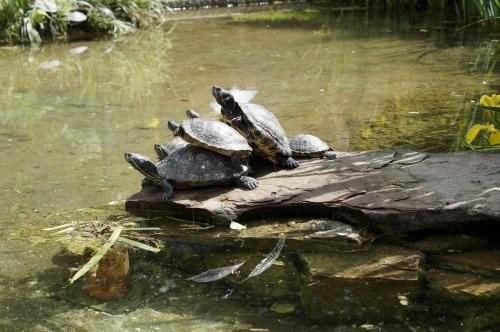turtles-793490_1920